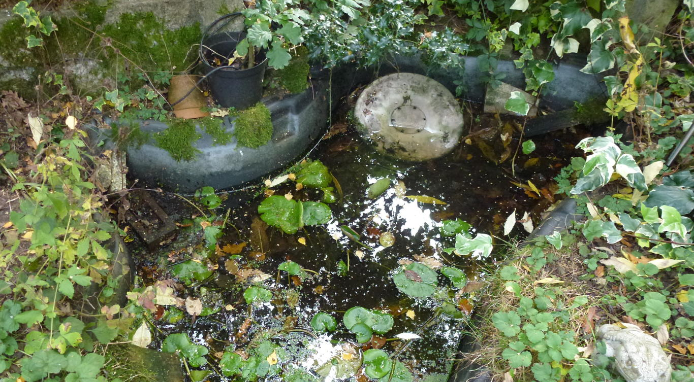 A old garden pond with steep slippery sdies.