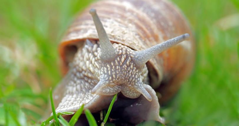 snail-close-up