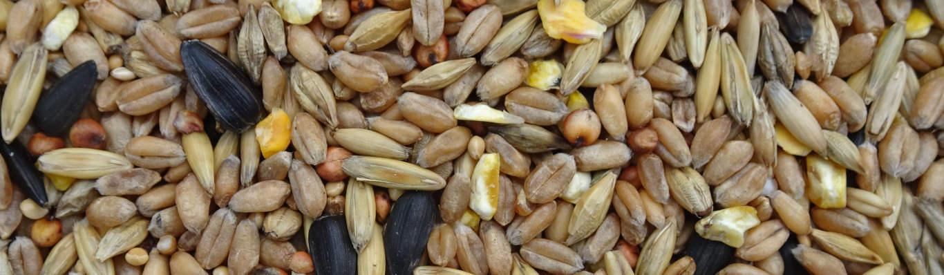 A dry bird seed mix